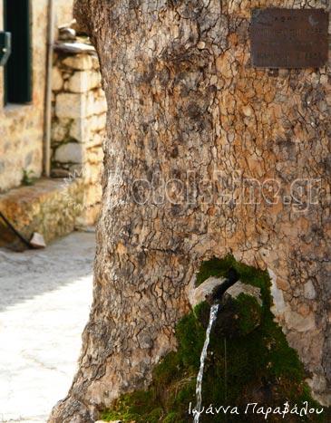 Πηγή μέσα από το δέντρο στην Γκούρα