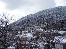 Πλάτανος ορεινής Ναυπακτίας