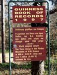 Ηπειρος, νομός Ιωαννίνων, Μονοδένδρι, Μονή Αγίας Παρασκευής, αγιογραφίες από το εσωτερικό της Μονής