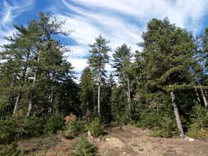 Ηπειρος, νομός Ιωαννίνων, πυκνά δάση και εντυπωσικά τοπία, θα συναντήσετε στο νομό Ιωαννίνων.