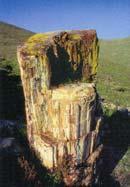 Λέσβος, Πάρκο απολιθωμένου δάσους, απολιθωμένος κορμός