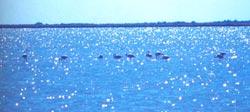 Πιερία, υδροβιότοπος