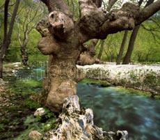 Ποταμός Αχέροντας, Αχέρων. Θεσπρωτία