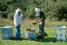 Μέλι Ζακύνθου, μελισοπαραγωγοί στην εργασία τους